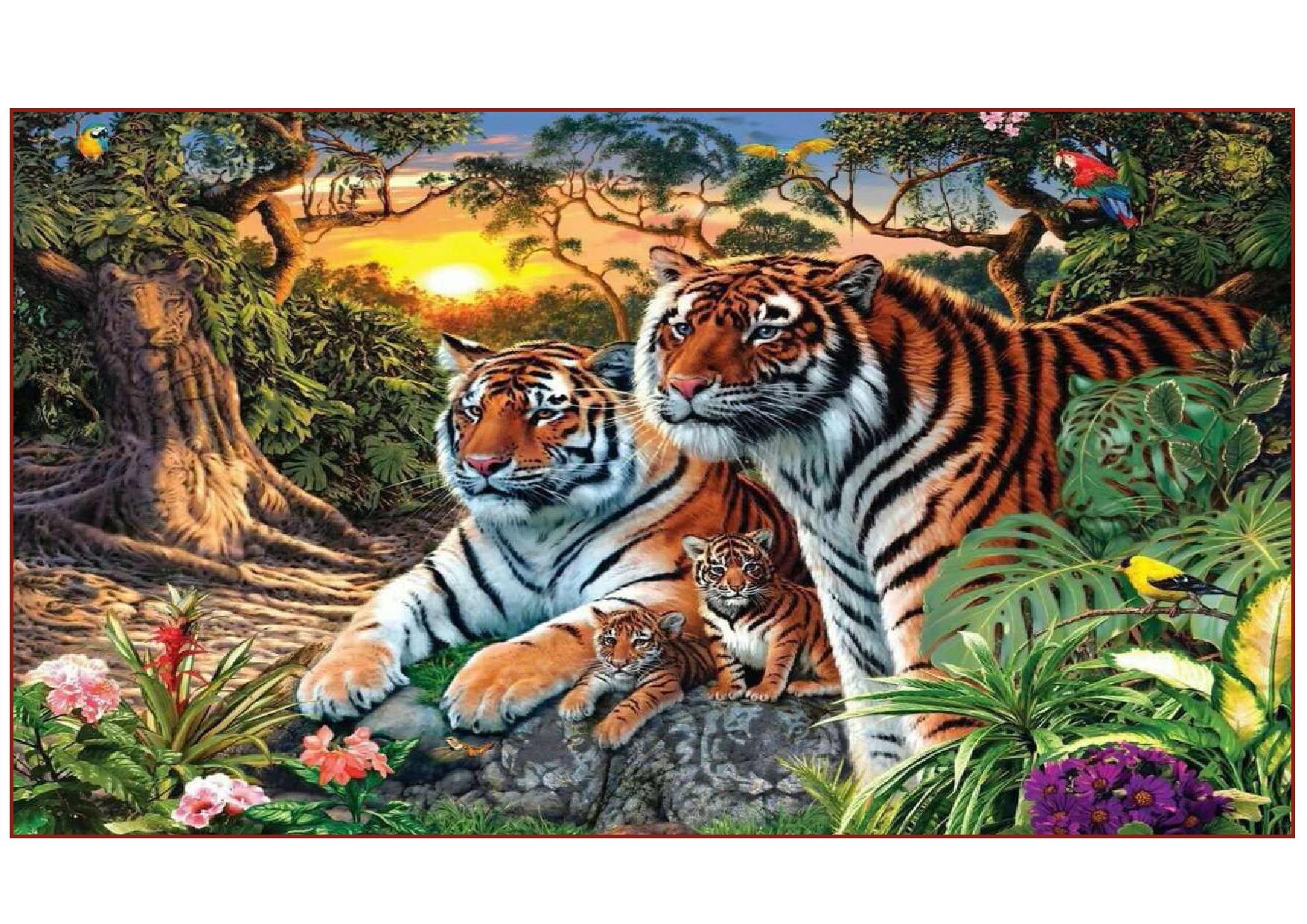 tigre-page0001.jpg